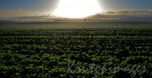 crops early morning Sth East Melbourne