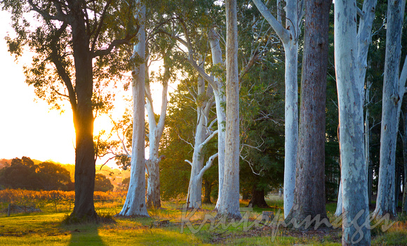 Sunset Beechworth